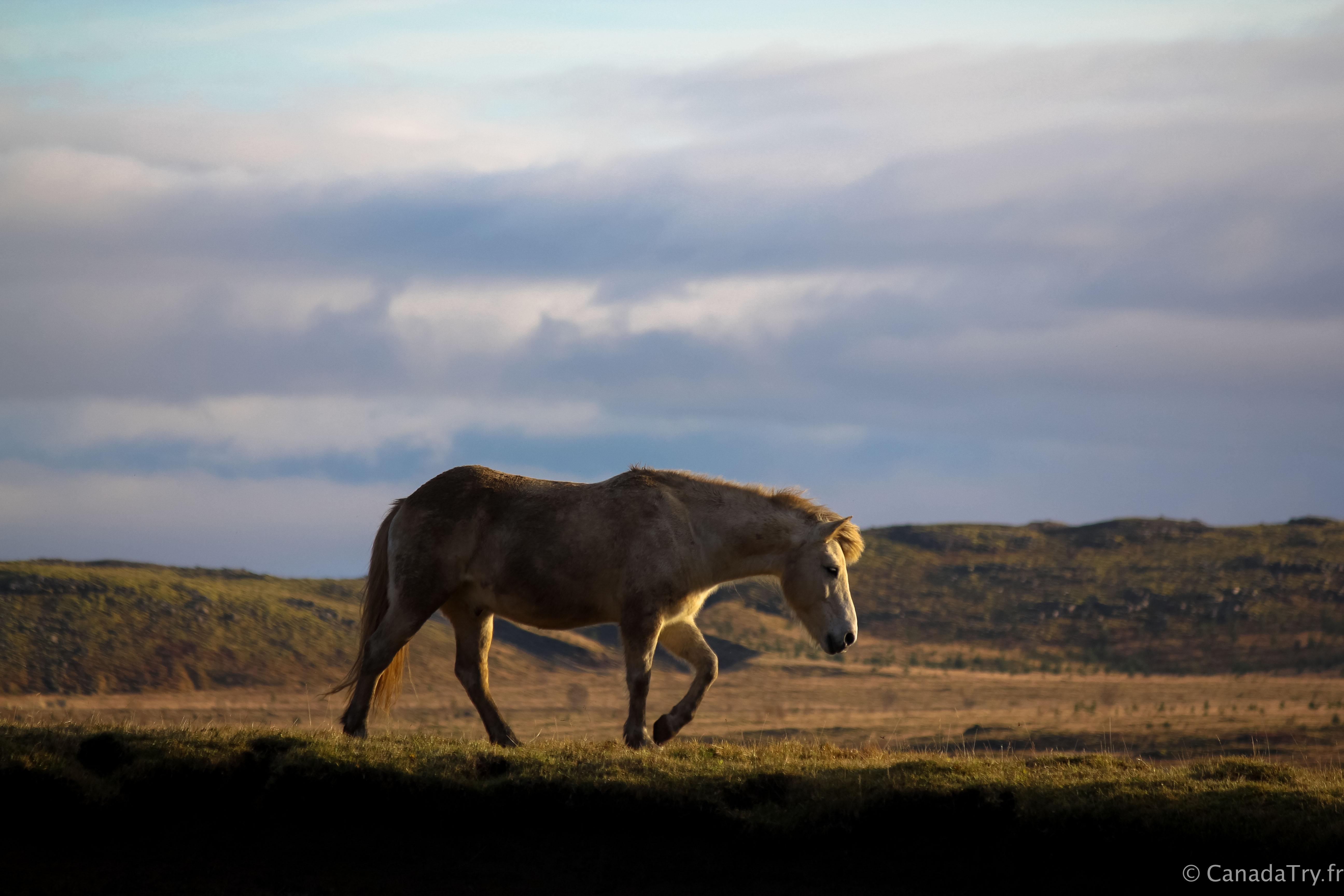 Une semaine en Islande #8 : d'Hveragerði au surréaliste Blue Lagoon