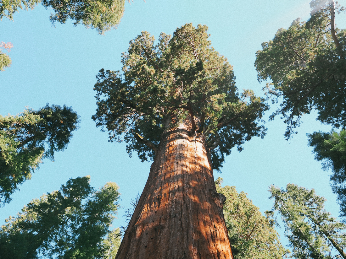 Road-trip en camping-car en Californie : 2 jours à Sequoia et Kings Canyon National Park !